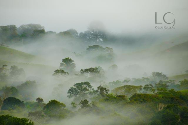 Morning Mist-0699