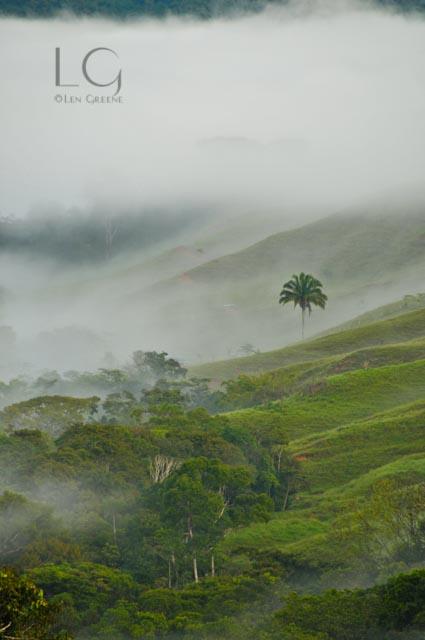 Morning Mist 2-0702