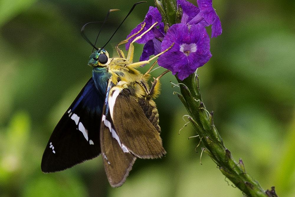 Bug&PurpleFlowerGreen