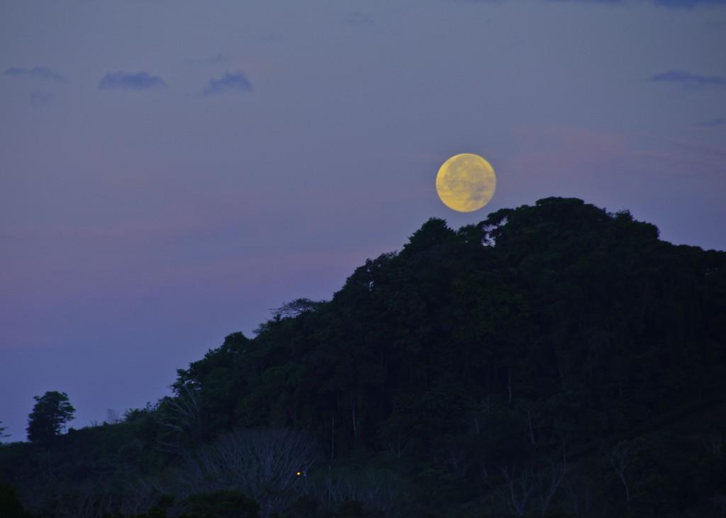 Finca Verde Moon
