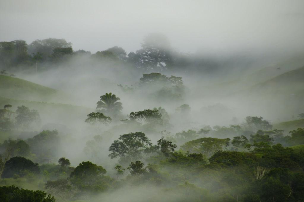 FincaVerde Mist