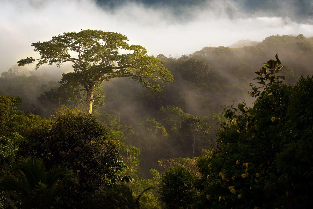 Finca Verde Ceiba Tree