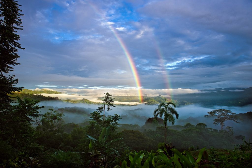 Finca Verde Morning Rainbow